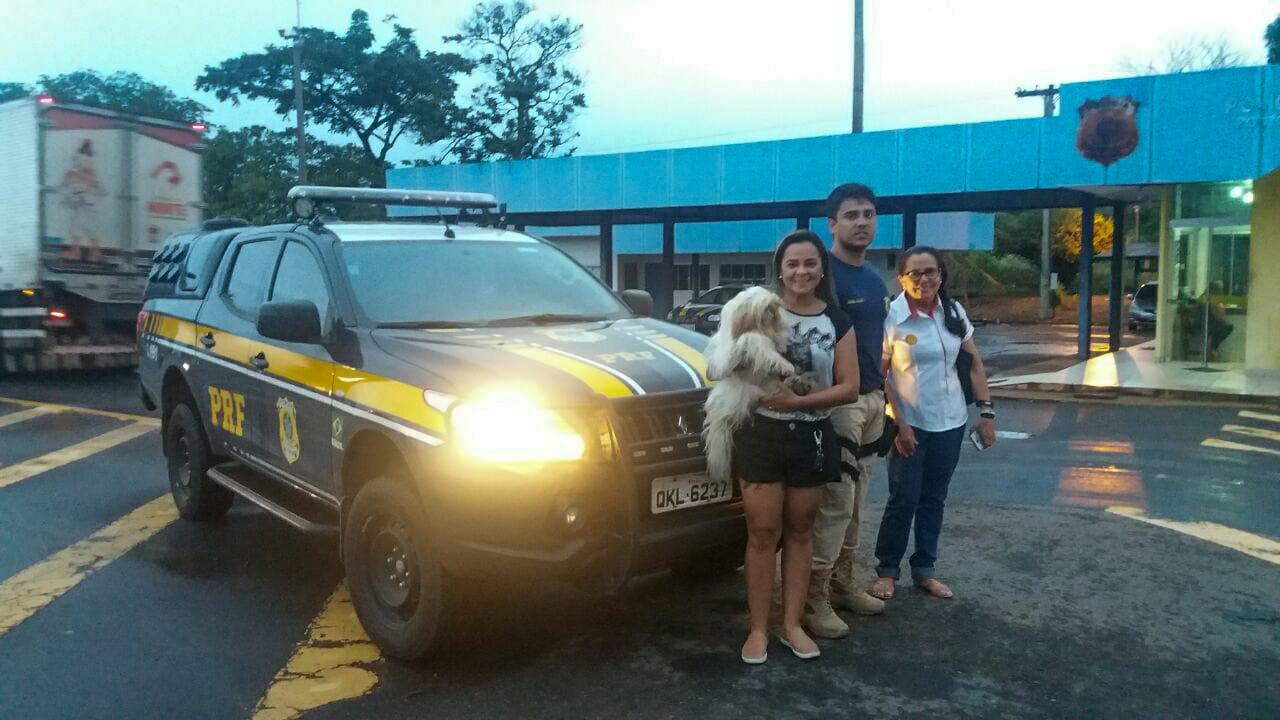 Cadelinha furtada por caminhoneiro no Maranhão é recuperada com ajuda da PRF de Guaraí