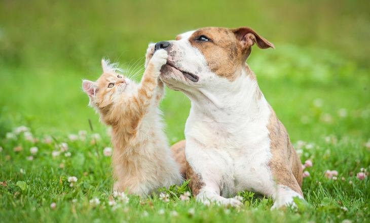 Em análise na Câmara, proposta de lei regulamenta a castração de cães e gatos em Guaraí