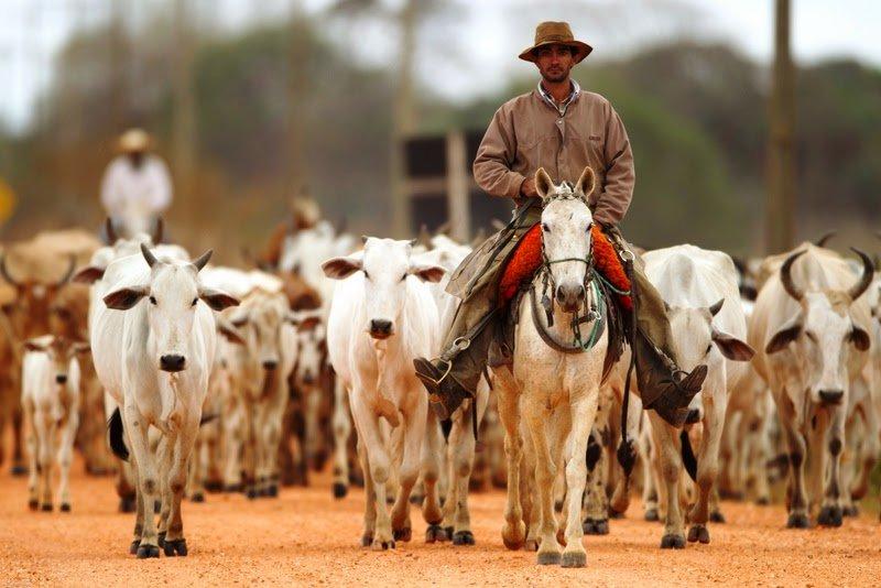 SINE oferta novas oportunidades de trabalho, incluindo vagas para açougueiro e vaqueiro