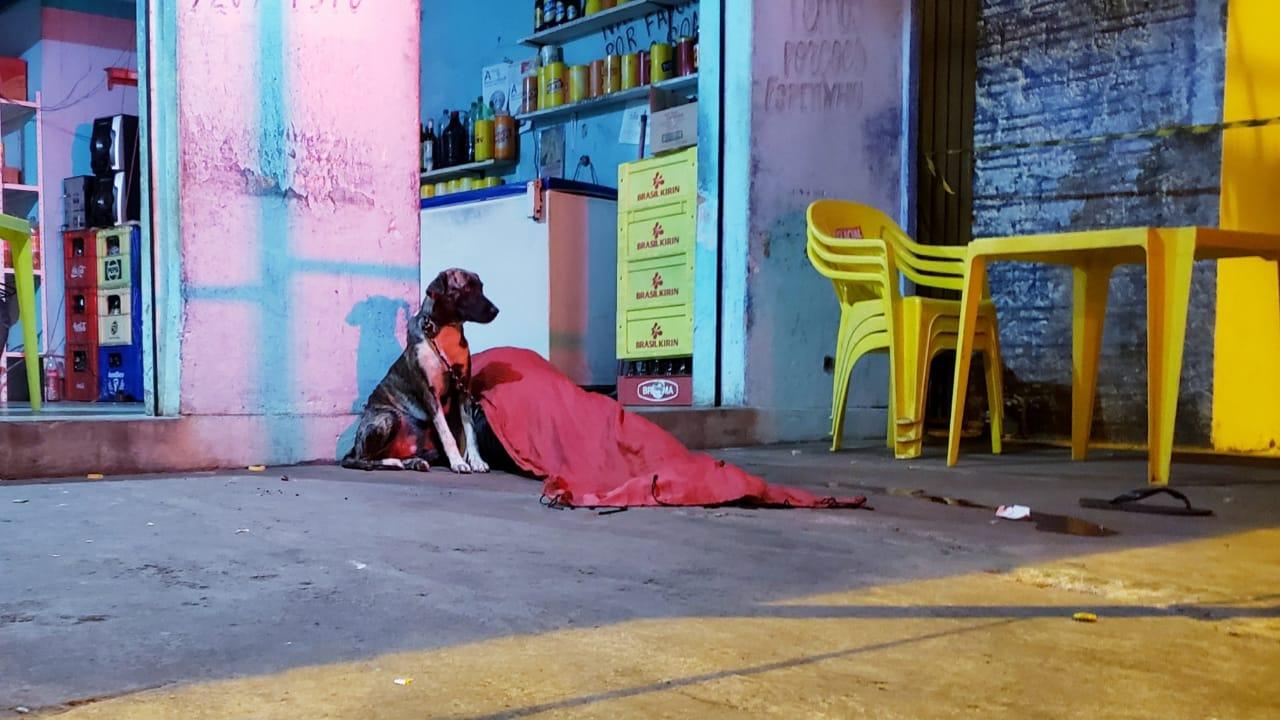 Cadelinha fica ao lado de dono assassinado próximo a um bar na região central de Guaraí