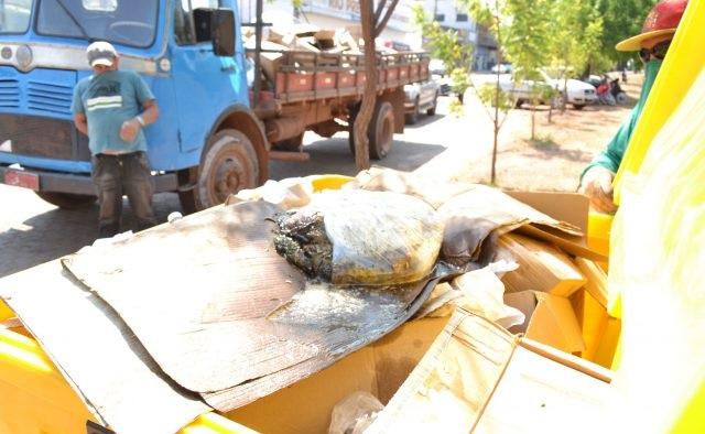 Contêineres destinados para reciclagem estão recebendo até restos de animais mortos em Guaraí