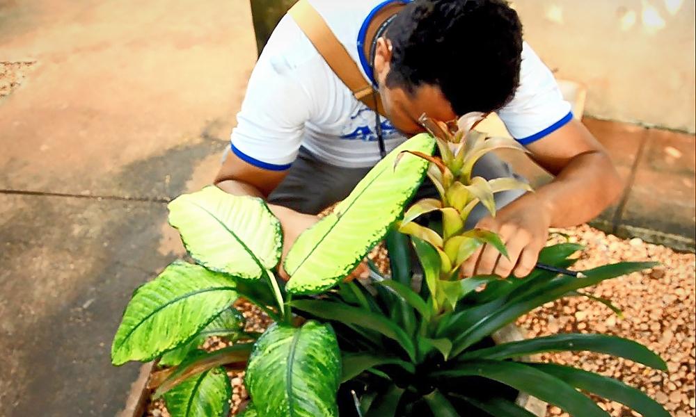 Guaraí está entre os 25 municípios tocantinenses prioritários no combate às arboviroses